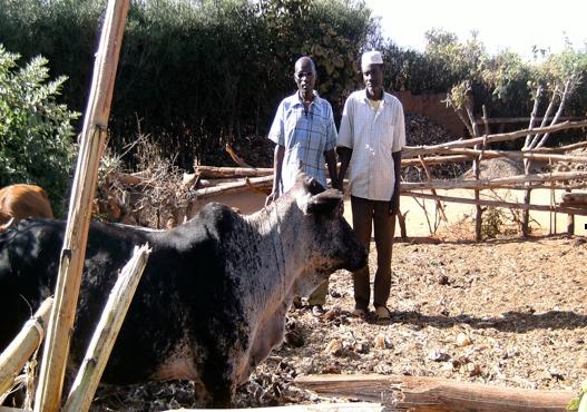 Peter Sima lärde sig om djurhållning under ett seminarium och äger nu kor som han får mjölk från. Han säljer även en del av mjölken för att få en inkomst.