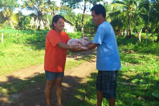 Filippinerna_grisuppfödning